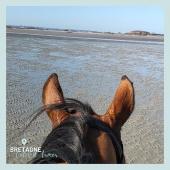 #MYBESTRIDINGPLACE 💙  Le calme avant la galopade 🤩  📍 Cotes d'Armor, Bretagne 📸 @sarah_legras   #mybestridingplace #baladeacheval #bretagne #cotesdarmor #bretagnetourisme #acheval #randonneeequestre