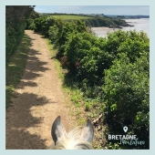 #MYBESTRIDINGPLACE 💙  Instant paisible sur ce sentier côtier breton ! 🥰  📍 Morbihan, Bretagne  #mybestridingplace #baladeacheval #morbihan #bretagne #bretagnetourisme #acheval #randonneeequestre