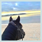 #MYBESTRIDINGPLACE 💙  Encore une sublime vue depuis les plages morbihannaises! Bien que les prochains jours sont menacés par l'orage, on se réconforte avec cette golden hour !🤩  📍Morbihan, Bretagne 📸 @charlotte.le.borgne   📩 Toi aussi participe à notre grande randonnée virtuelle en nous envoyant ta photo par message!🤩  #mybestridingplace #baladeacheval #morbihan #bretagne #acheval #randonneeequestre