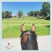 #MYBESTRIDINGPLACE 💙  Château, prairie verdoyante et arbres fleuris : ambiance idyllique capturée par Léa, en selle sur Elga 🤩  📍Orne, Normandie 📸 @elga_du_coudray   📩 Toi aussi participe à notre grande randonnée virtuelle en nous envoyant ta photo par message!🤩  #mybestridingplace #baladeacheval #normandie #tourisme #acheval #randonneeequestre #orne