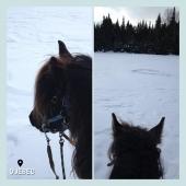 #MYBESTRIDINGPLACE 💙  On fait un saut dans l'espace-temps avec ce paysage enneigé au Québec 🥰 Et vous, avez vous déjà monté dans la neige ?   📍Québec 📸 @mlle.villetot   #mybestridingplace #baladeacheval #quebec #tourisme #acheval #randonneeequestre