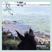 #MYBESTRIDINGPLACE 💙  Profitons de la vue sur cette mer translucide aux vaguelettes régulières dans laquelle se jette la Vilaine… 🌊  📍 Morbihan, Bretagne  #mybestridingplace #baladeacheval #bretagne #bretagnetourisme #morbihan #acheval #randonneeequestre