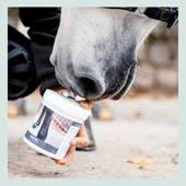 Texture souple et légère, l'Ani Gel favorise la récupération des tissus et limite les engorgements. 🤩  🛍 NOUVEAU FORMAT 1L • À shopper d'urgence au prix de 23,90€ (au lieu de 34,15€) durant toute la durée des promotions d'hiver ➡️ Rendez-vous sur www.ani-marine.fr 🚨  📸 @aj.graphies  🐴 Alikat @samanthaple