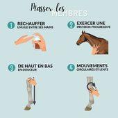 📌 MÉMO-MASSAGE 💡  L'huile sèche Ani Massage s'utilise sur les membres afin de les préparer à l'effort ou en récupération post-effort puisque les huiles essentielles qu'elle contient permettent d'activer la circulation sanguine. 🥰🐴  1️⃣ Réchauffez l'huile en frottant vos mains entre elles.  2️⃣ Exercez une pression progressive : d'une simple caresse à un appui prolongé, puis finalisez le massage par un effleurement.  3️⃣ Appliquez l'huile sur le membre de haut en bas tout en douceur par un mouvement lent.  4️⃣ Faire pénétrer l'huile sous la peau à l'aide de mouvements circulaires lents jusqu'à absorption de l'huile.