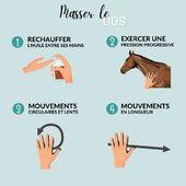 📌 MÉMO-MASSAGE 💡  La paume de vos mains, le bas de la paume, la pulpe des doigts, le dos de la main, la tranche de votre main : toutes ces différentes zones vous permettront de réaliser des pressions différentes afin de réaliser un massage complet. 🥰🐴  1️⃣ Réchauffez l'huile en frottant vos mains entre elles.  2️⃣ Exercez une pression progressive : d'une simple caresse à un appui prolongé, puis finalisez le massage par un effleurement.  3️⃣ Masses votre cheval en réalisant des mouvements circulaires.  4️⃣ Vous pouvez aussi faire de grands mouvements lents permettant de mobiliser le muscle sur toute sa longueur.